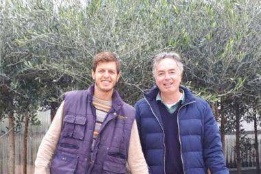 Vendita Piante di Olivi
